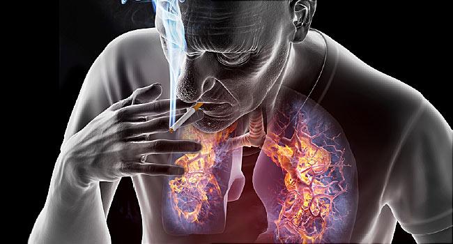 rák genetikai kft papillon zeugma pulyka belek