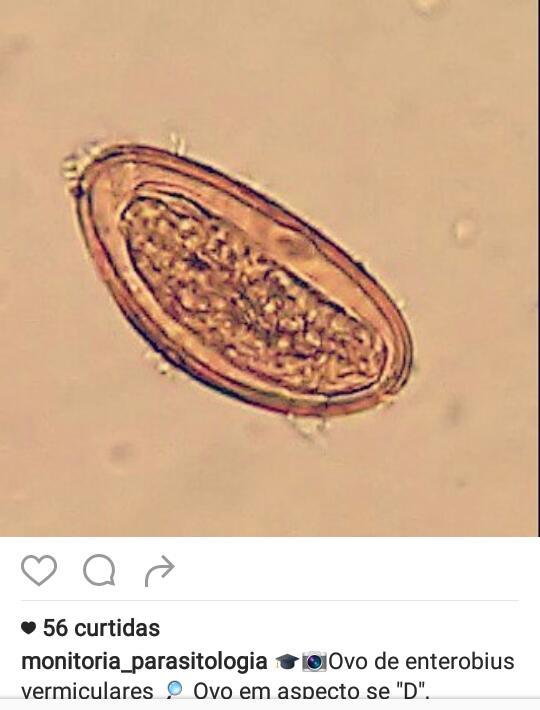 Belefáradt a pinwormsbe, Paraziták az emberi kakukkban