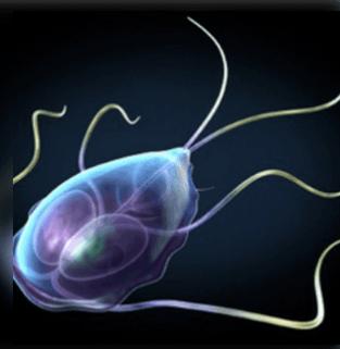 paraziták kezelése emberi tünetekben