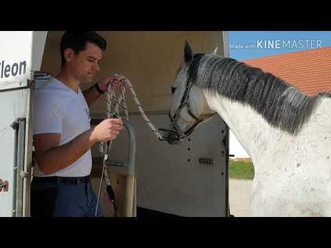 méregtelenítő kiegészítők lovak számára férgek a falakon