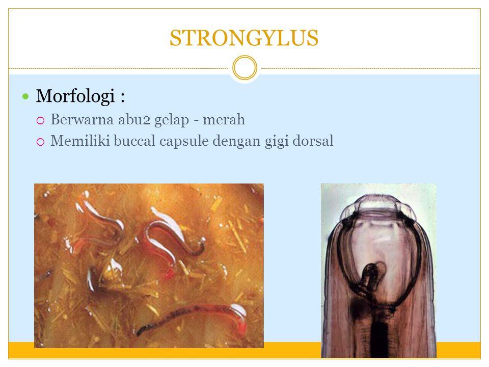 penyakit helminthiasis adalah