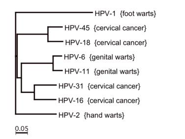 hpv anogenitális szemölcsök