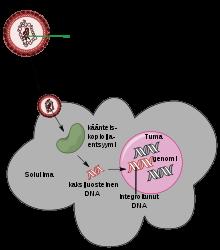 távolítsa el a kálium-permanganát papillómát