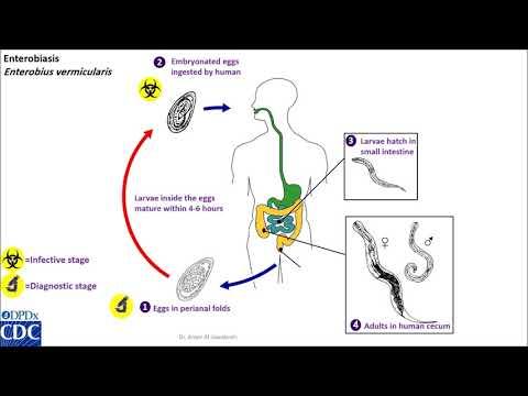 hogyan lehet kilábalni az emberi papillómából anthelmintikus gyógyszerek túladagolása