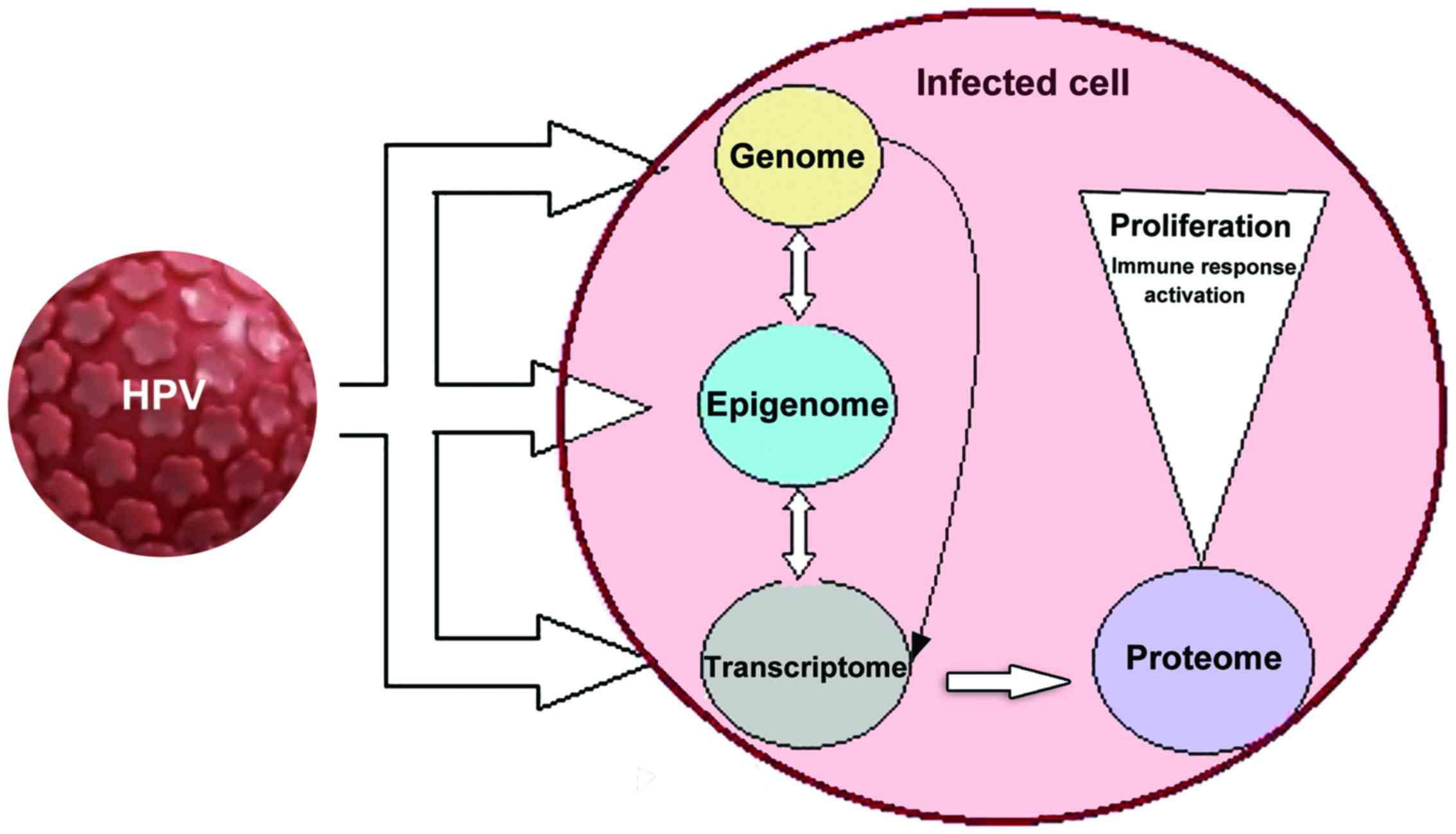Giardia bebe nz Paraziti jetra