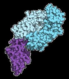 emberi papillomavírus tüdőrákban