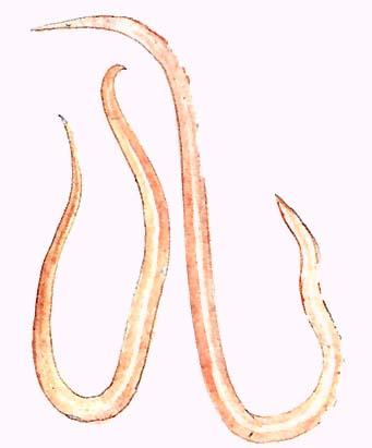 férgek felülvizsgálják kezelésüket ductalis papilloma fájdalom