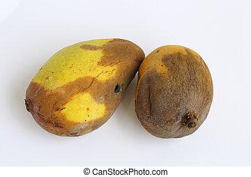 féreg mangó férgek tojás címe