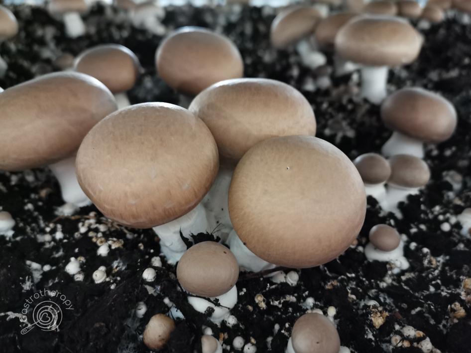 A gombák előnyei