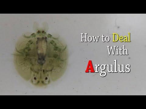 papillómák vagy condyloma kezelése jóléti paraziták