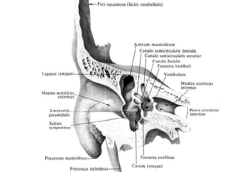 HPV krém gyomorrák borrmann