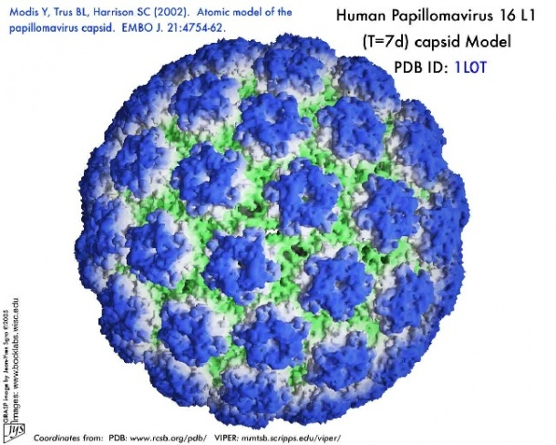 papilloma hpv vírus