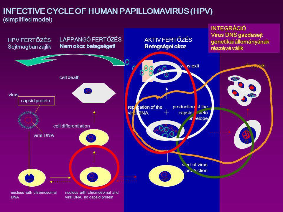 hím páfrány paraziták kenőcs a nemi szemölcsök kezelésében