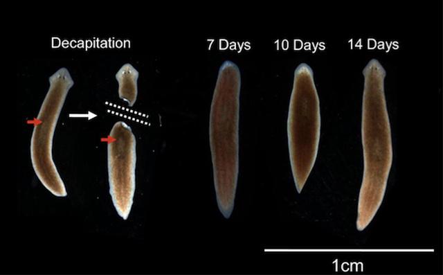 mindez az emberi férgekről szól voronezh paraziták kezelése
