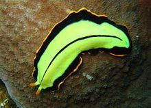 Platyhelminthes dal, Navigációs menü