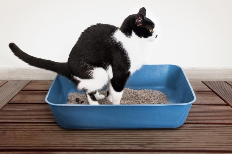 macska férgek ellen