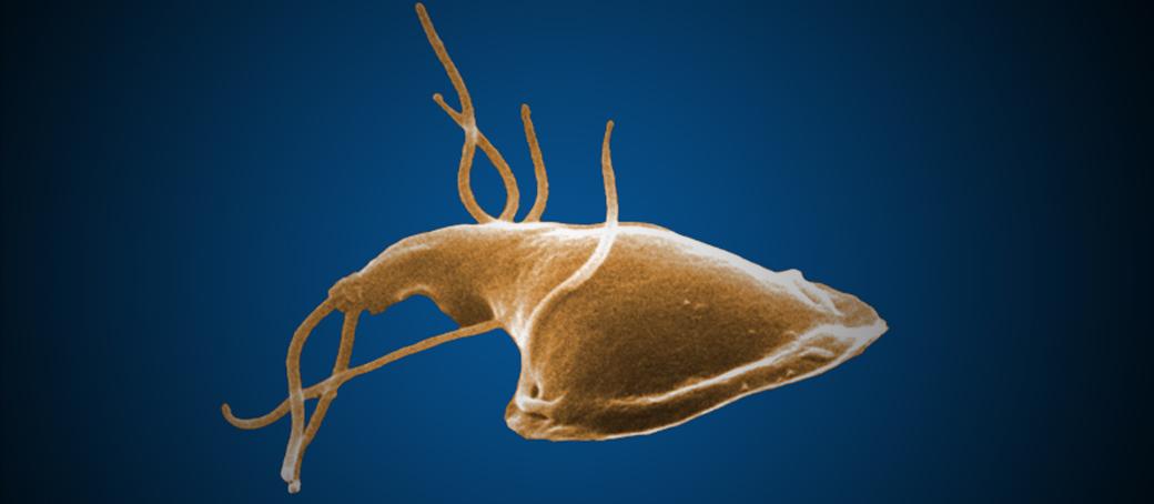 gyomor giardiasis hogyan lehet eltávolítani a papillómákat a férfiaknál