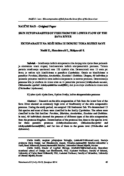 Giardia parazit kod pasa. Bélféreg oka