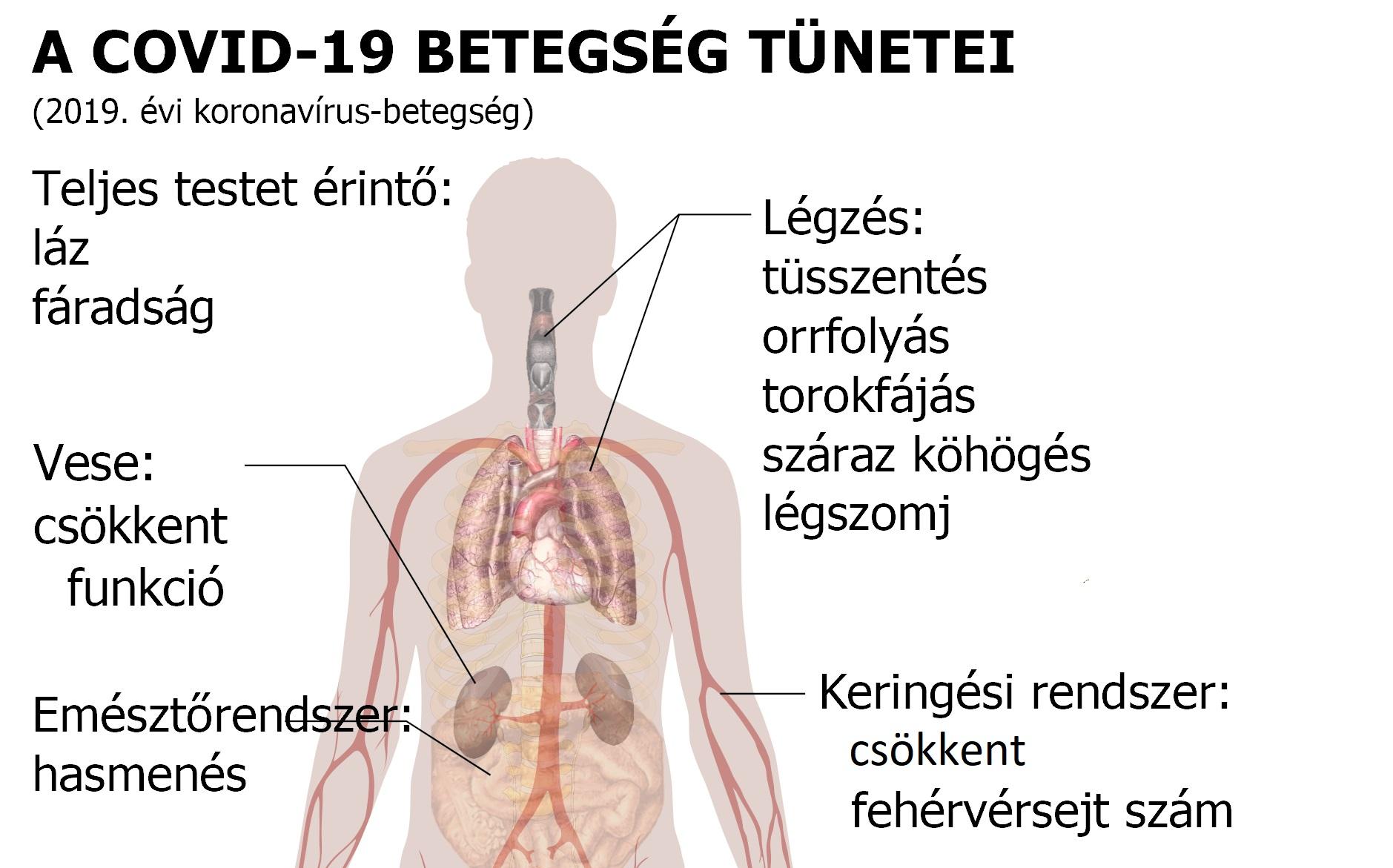 törpe törpe tünetek embereknél