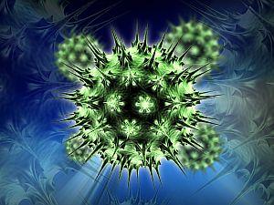 humán papillomavírus vastagbél