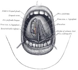 Papillomák a nyelv fotó alatt