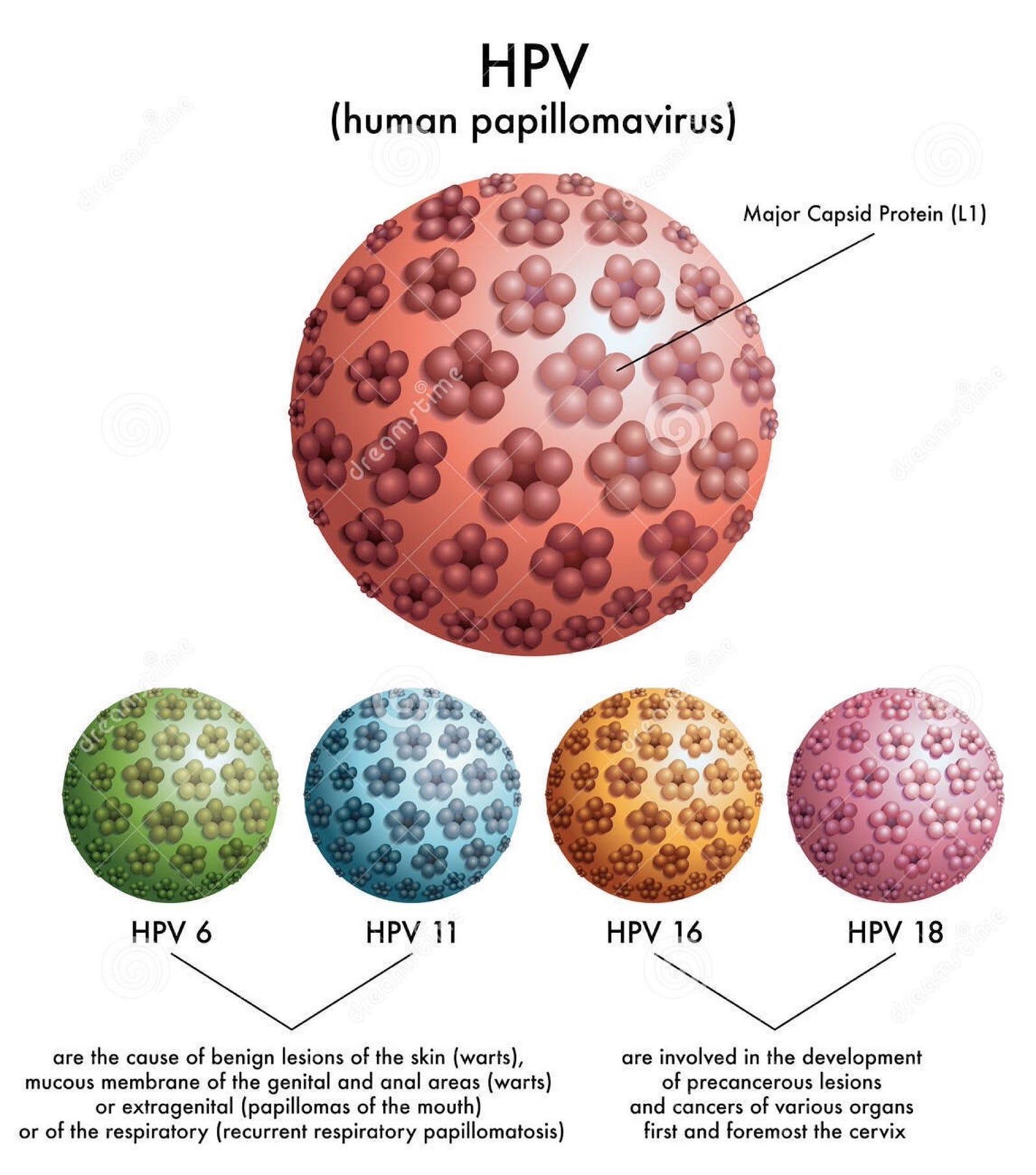 A HPV valószínűleg meggyógyul