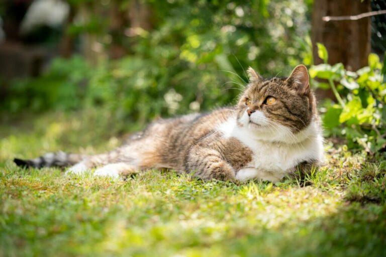 papillómák macskákban mit kell tenni