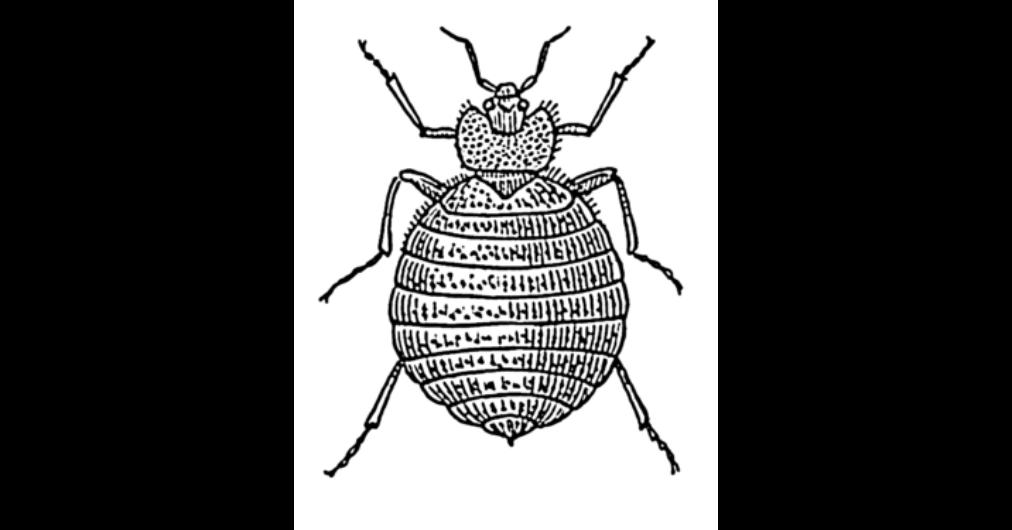 hogyan lehet kimutatni a parazitákat