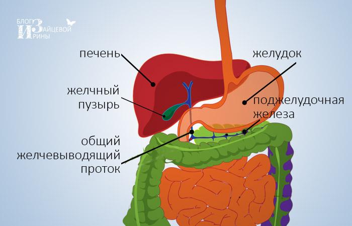 a helminthiasis tanulmányozza, hogyan kell bevenni