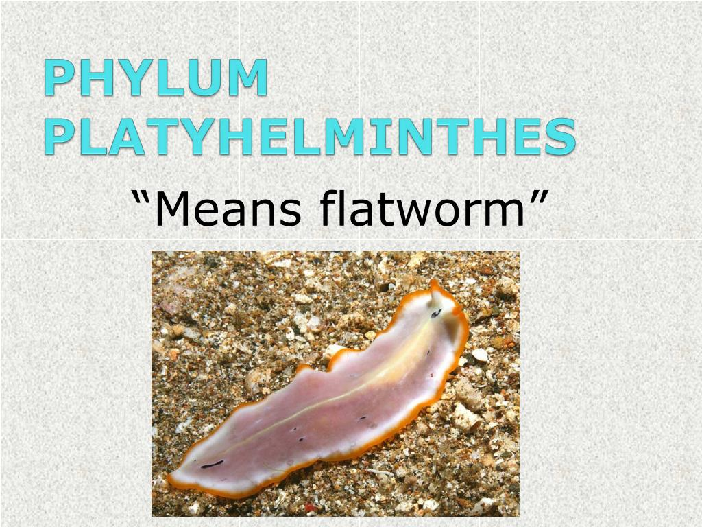 cpting platyhelminthes ppt