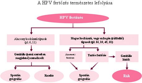 papillomavírus fertőzés patogenezise