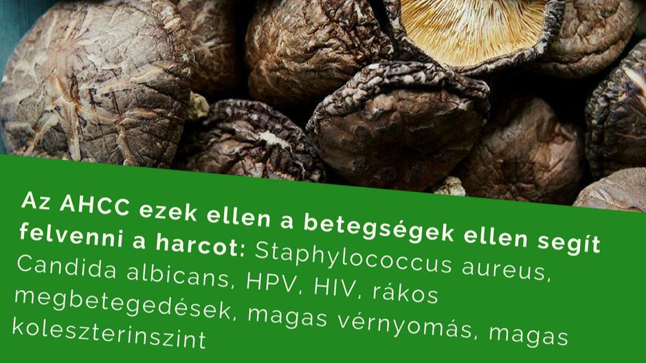 Lehetséges, hogy a HPV kezelhető lesz a gyógygombákkal?