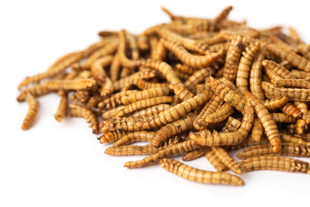 Thai féreg diéta pirula név, Worms fogyókúra (tabletta, férgek) - tények, ahol vásárolni, az ára