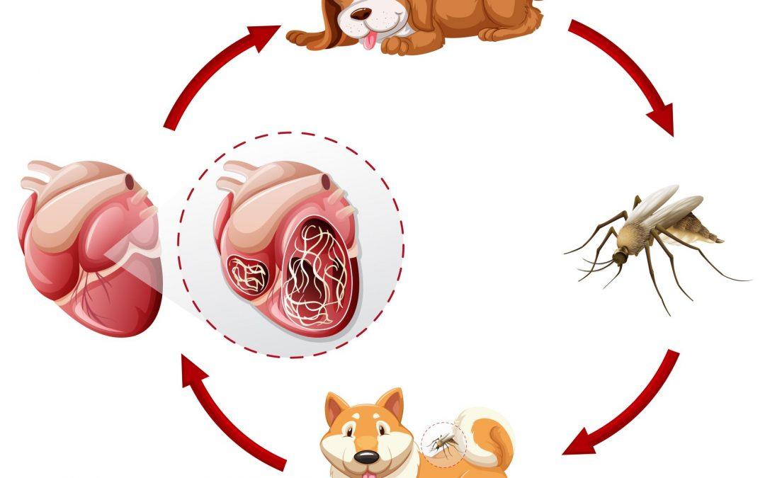 Férgek megelőzése felnőttekben és gyermekekben, Bélférgesség tünetei és kezelése
