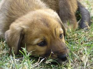Giardiasis (giardiázis): kutyára, emberre egyaránt fertőző betegség - Egészség