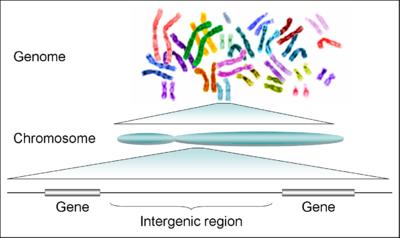 Ezért egyél minden nap bazsalikomot - Hogyan lehet megölni férgeket az emberi kromoszómákban