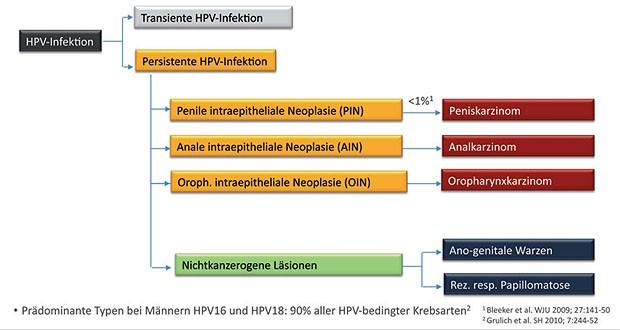 hpv impfung hamburg