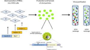 hpv vírus a krvi-ben