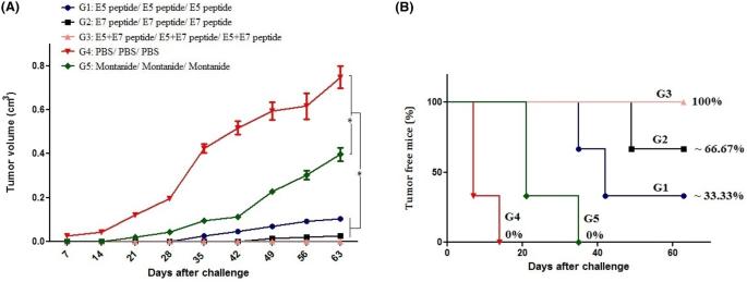 papillomavírus 3. szint