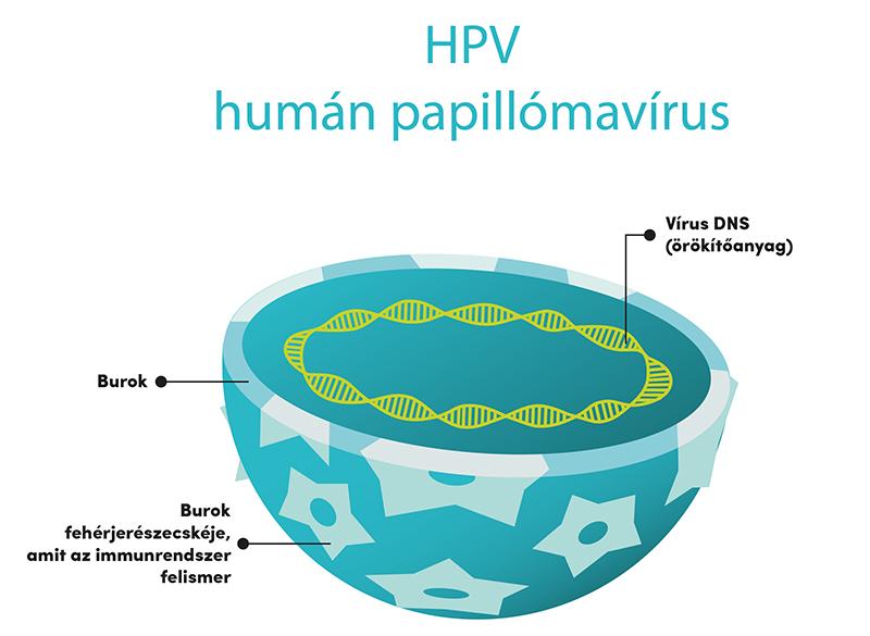 papillomavírus fertőzés meghatározása a holoparazita