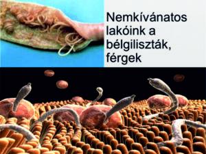 Paraziták az emberek agyában - Női Egészség Éve