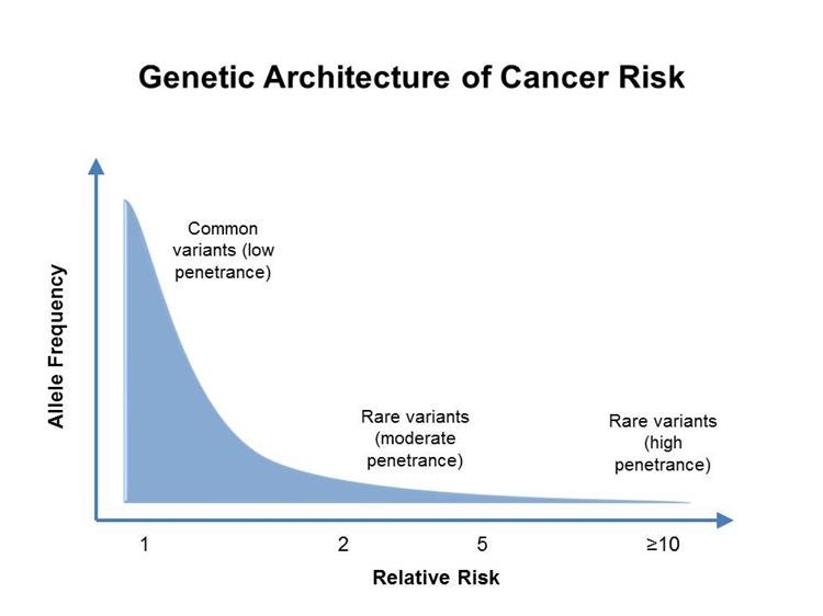 prosztatarák genetikai markerek