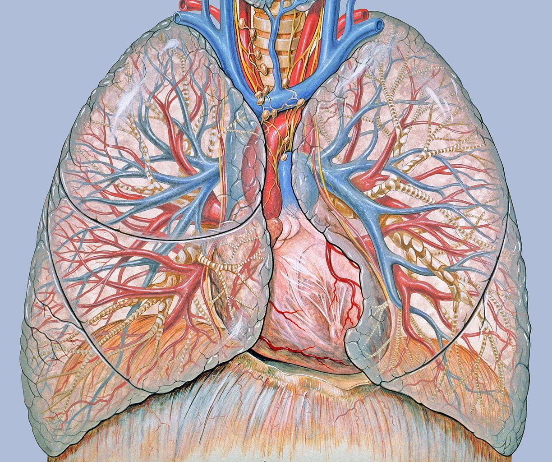 Tüdőrák kialakulása