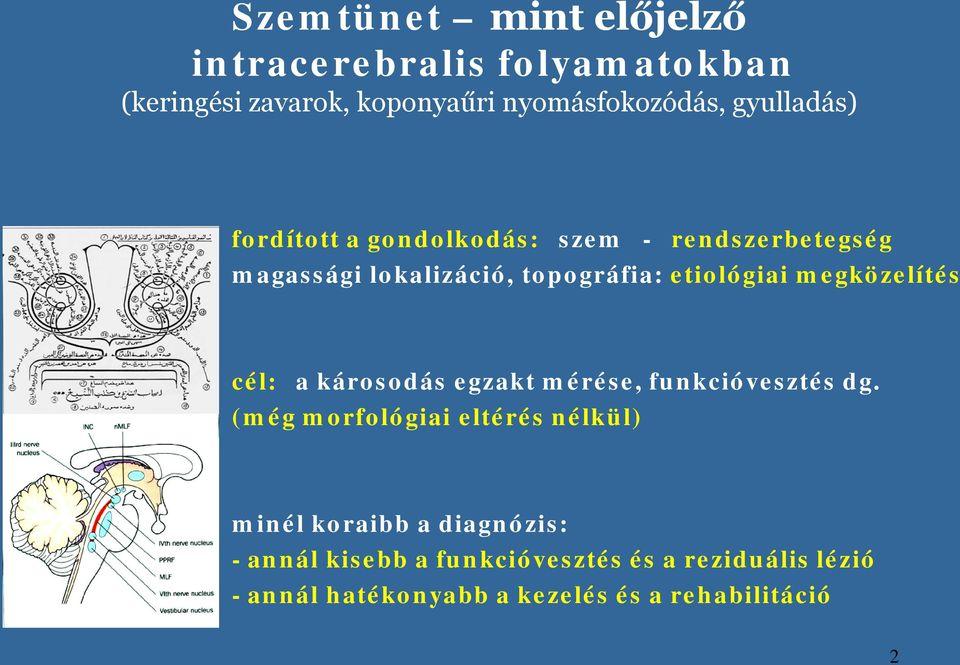 Betekintés: Kidolgozott neurológia tételsor II.