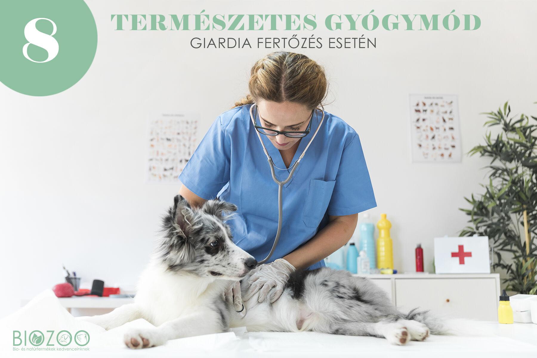 giardia vakcina kutya áron