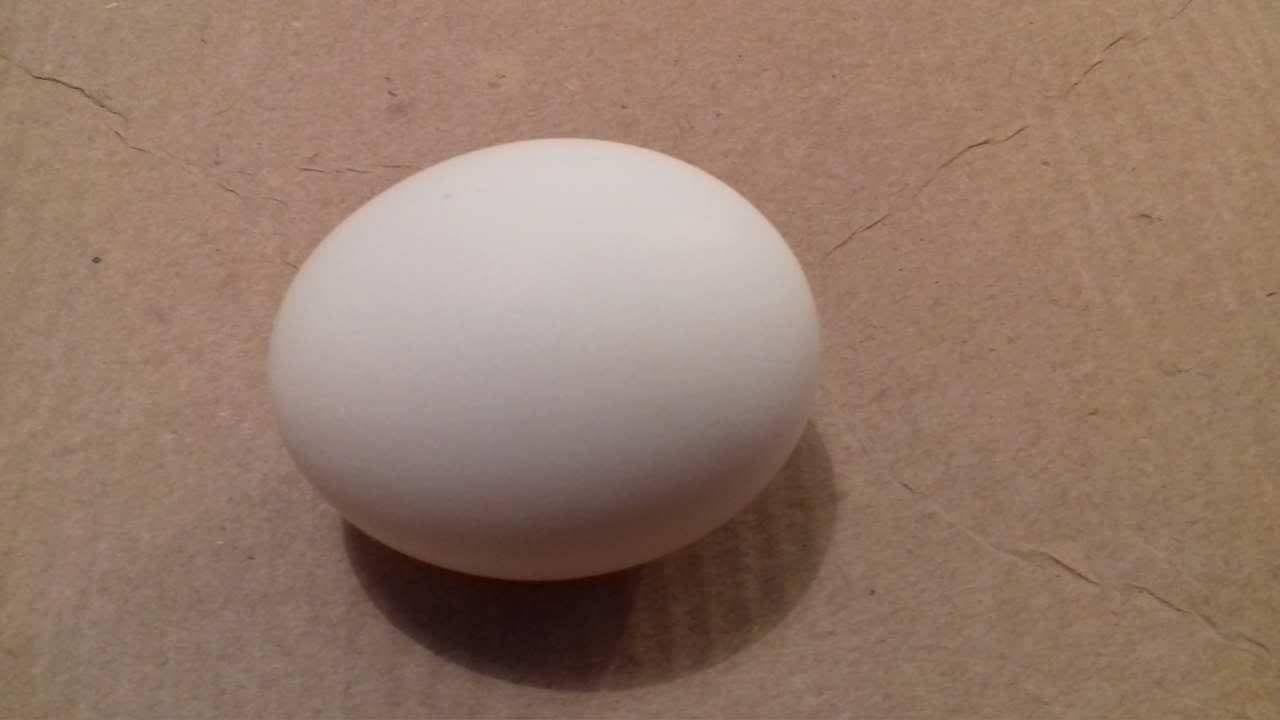 ahol a kerekférgek tojást raknak