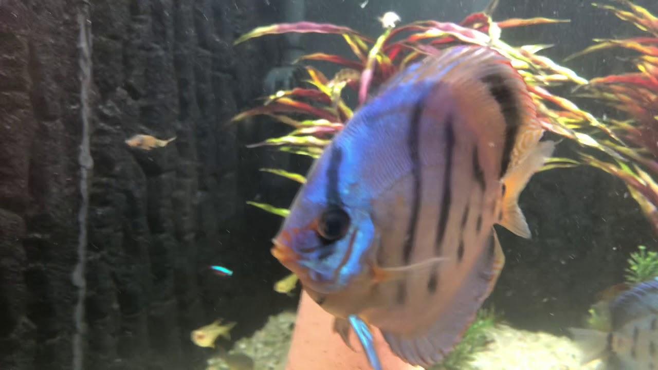 Miért hal meg hal a akváriumban? Akvárium kezdőknek