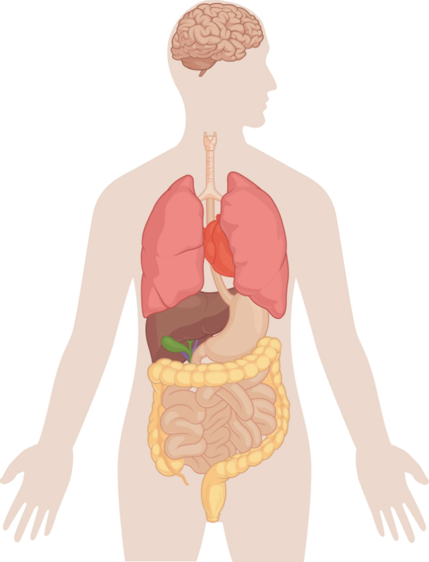 Milyen nagy férgek vannak az emberi testben? Bélférgesség tünetei és kezelése