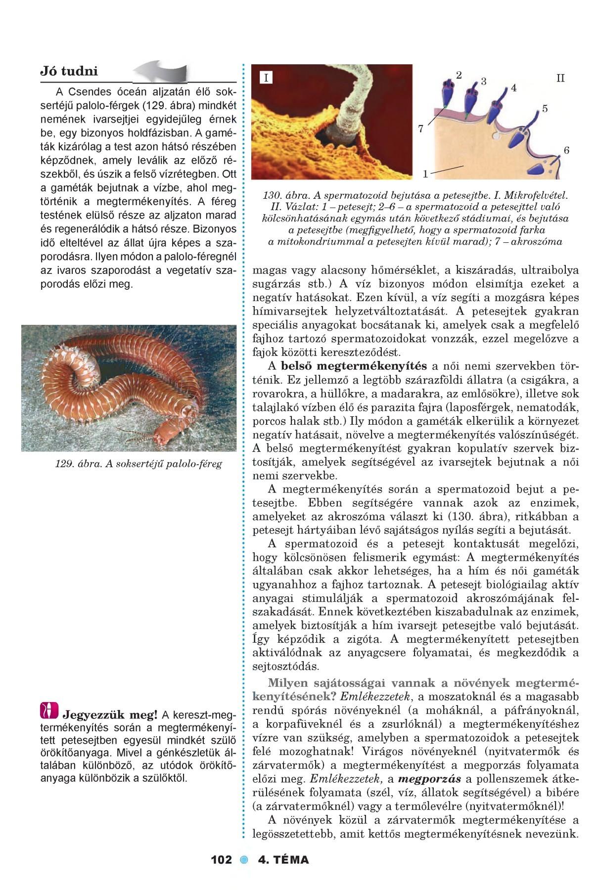 A pinwormok ascariasis vagy enterobiasis