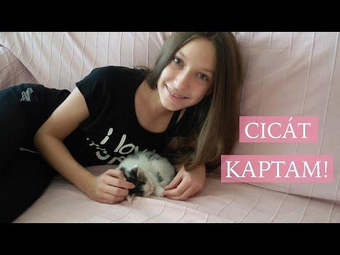 Kismacska féregtelenítés | Zooplus Macska Magazin